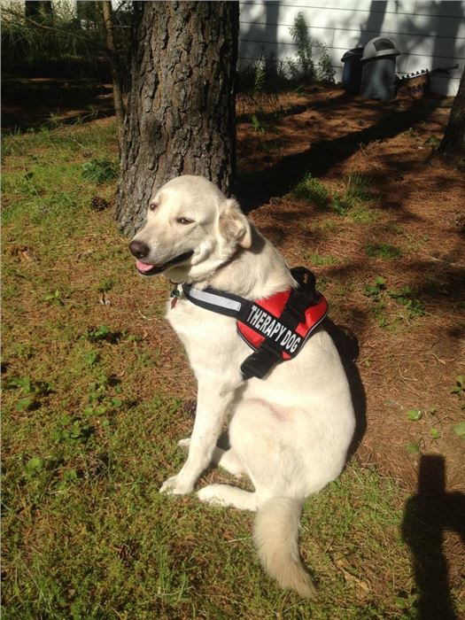 SEMO Regional K9 Search Team - Therapy Dogs
